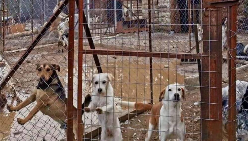 Νεκρά σκυλιά σε καταφύγια  λόγω «Ιανού»