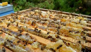 Ζητούμενο η στήριξη των μελισσοπαραγωγών της Κρήτης