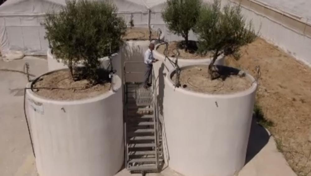 Στην Κρήτη η επανάσταση για την παραδοσιακή παραγωγή της ελιάς (φωτογραφίες)