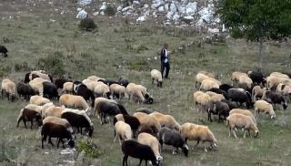 Κτηνοτρόφοι εναντίον ζωοκλεφτών στην Κρήτη!