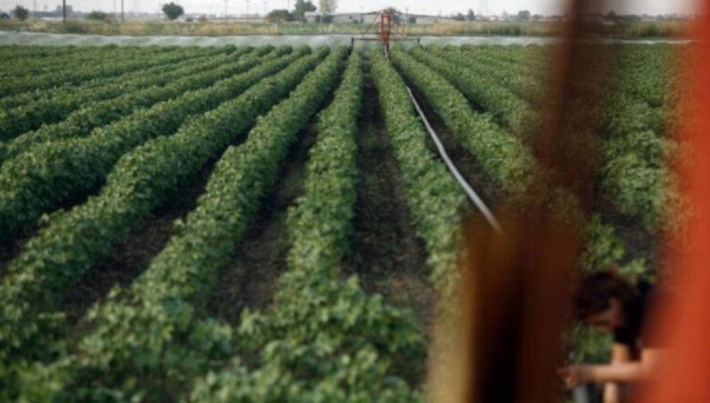Δεκάδες κρούσματα κορονοϊού σε εργάτες γης!