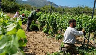 Κρήτη: Εργάτες μόνο απο... τρίτες χώρες - Το παράδοξο για χωράφια και θερμοκήπια